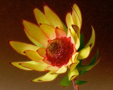 Protea 3
