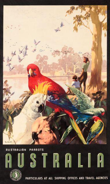 Australian Parrots - Vintage Travel Poster by James Northfield